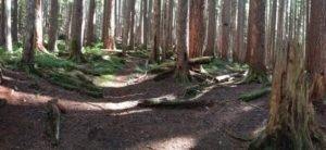 Panoramic shot of trailhead junction that leads up the Appleton Pass Trail