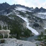 Mountain Goat poses at Leprechaun Lake