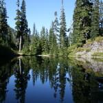 Reflections on a still pool, near Lower Wildcat Lake