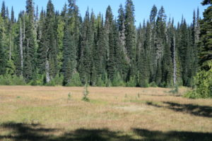 Too many meadows and open grassy areas that you will walk through or around.