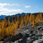 Larch in beautiful contrast to the white granite