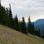 Wildflowers adorn the grassy slopes along the ridgeline