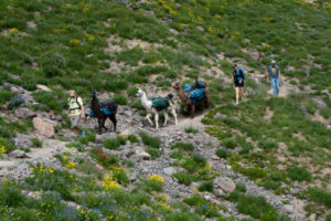 Llamas, or Alpacas, I don't know, but they provide an easy way to pack gear into the backcountry
